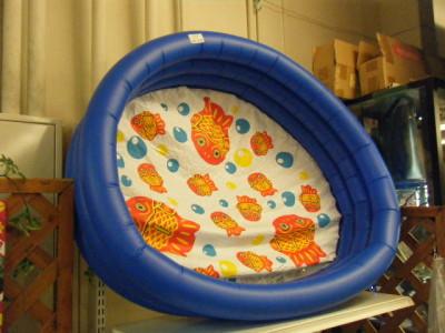 プール 金魚